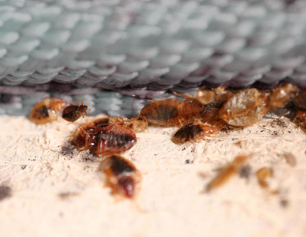 sue hotel for bed bug infestation in room