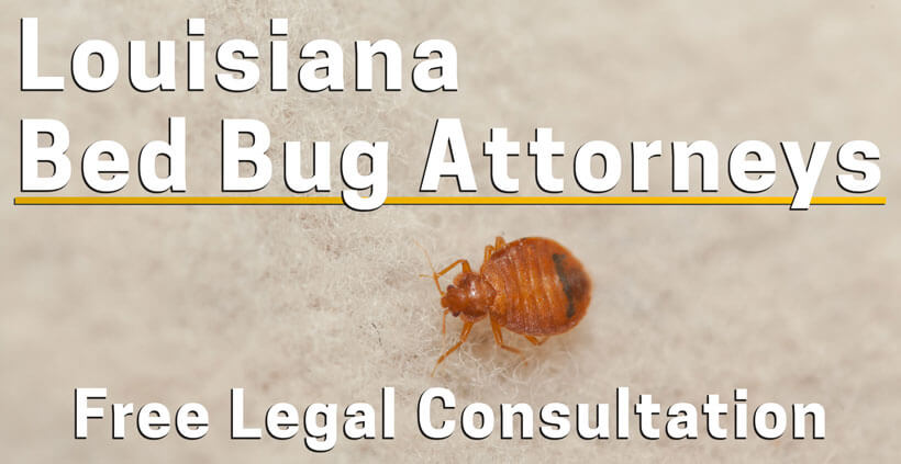 Bed Bug Lawyer Louisiana Bed Bug Bite Injury Attorney