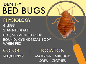 Bed Bug Lawyer in West Virginia