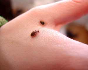 landlord responsible for bed bugs