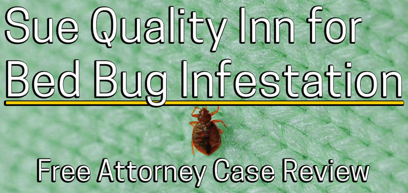 Sue A Quality Inn For Bed Bug Bites Or A Bed Bug Infestation In My Room