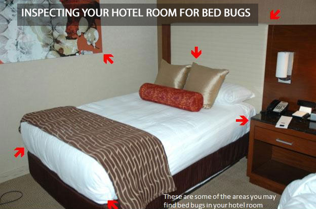 What to Do - Steps to Take After a Bed Bug Bite Incident