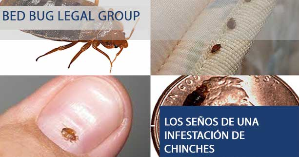 Pursuing a Bed Bug Injury Claim and Receiving Compensation