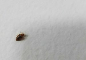 Hotel Bed Bug Lawyer in Corpus Christi, Texas sue compensation attorney infestation