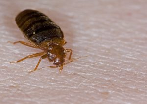 bed bug lawyer in el paso texas sue attorney compensation