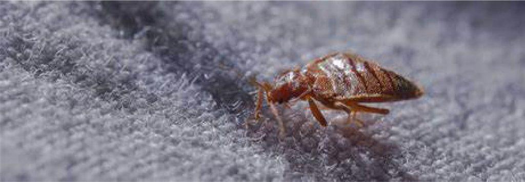 bed bug lawyer in las vegas sue compensation sue