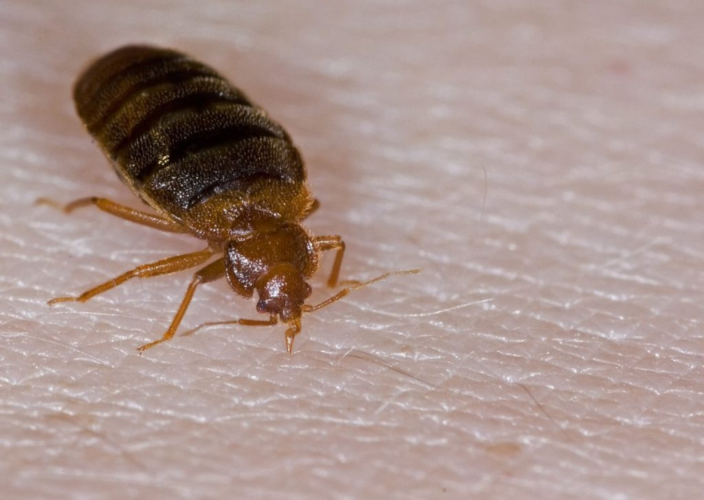 bed bug lawyer in oakland california sue attorney compensation
