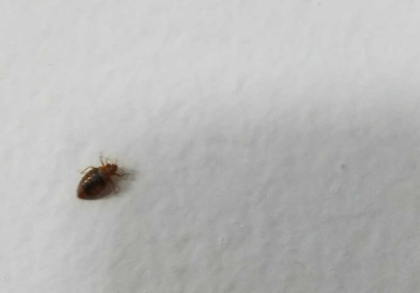 Ohio Bed Bug Laws—Columbus, Cleveland, Cincinnati, Akron, and Toledo lawyer compensation attorney lawsuit sue
