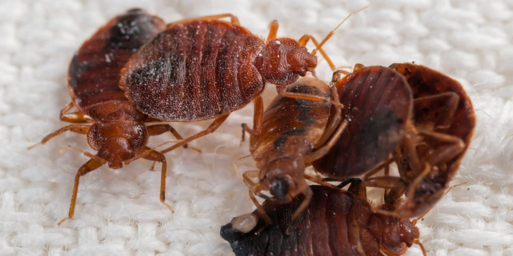 indiana bed bug lawyer sue compensation attorney