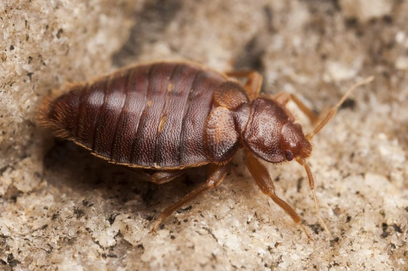 Montana Bed Bug Laws—Billings, Missoula, Great Falls, Bozeman, and Butte attorney lawyer sue infestation sue
