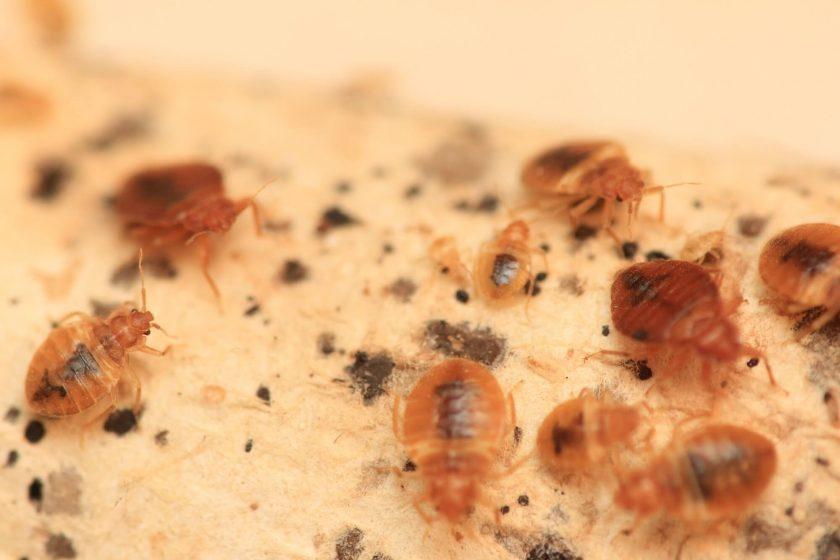 alabama bed bug lawyer infestation sue compensation