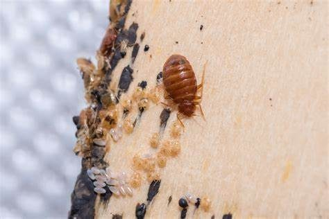 Bed Bug Laws in Kentucky – Lexington-Lafayette, Ironville, Meads, Louisville, and Lexington sue lawsuit lawyer attorney